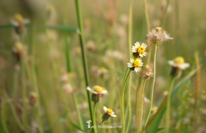 ภ า พ เ ก่ า เ ล่ า ใ ห ม่ Relaxing Taking Photos Enjoying Life EyeEm Best Edits Fujifilm X-m1 Walking Around Flowers Photography First Eyeem Photo Nature