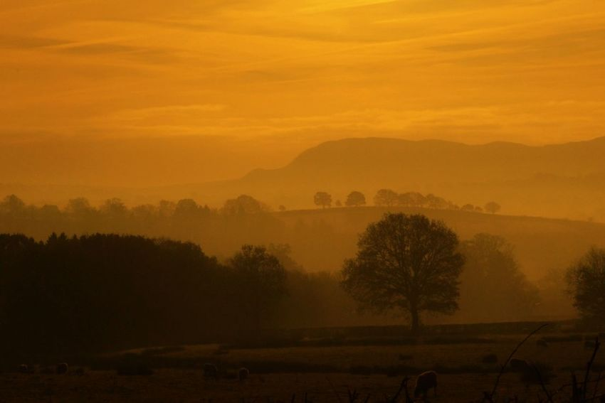EyeEm Best Shots - Landscape Mist Sunrise Landscape_Collection Landscapes With WhiteWall