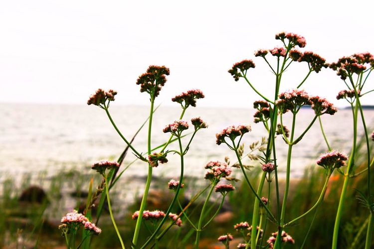 Flower Plant Flowering Plant Beauty In Nature Growth Freshness Sky Nature Close-up Tranquility Focus On Foreground Petal