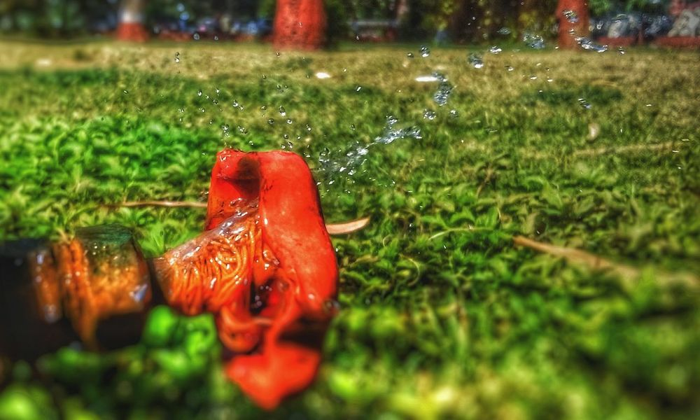 Water Waterdrop Waterdroplets Water Fountain Sprinkler Orange Color Tap Water Licking Nose Grasses Waiting Mobilephotography 5mpcamera Mobilephoto Mobile_photographer was waiting for squirrel but got this 😅😅😅