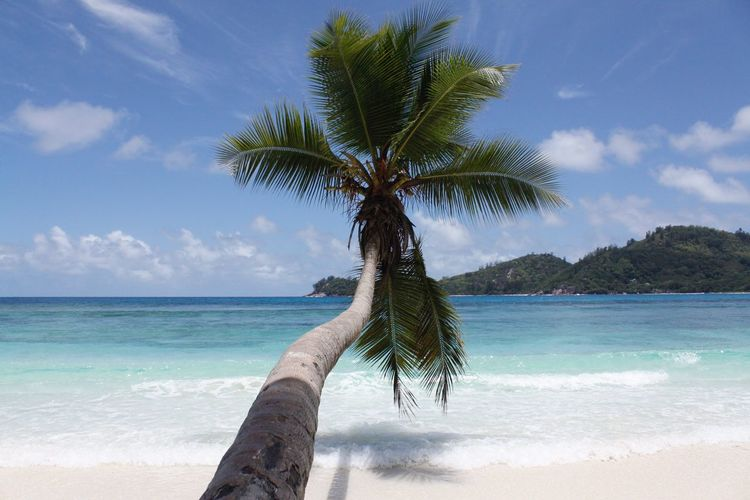 Hello World Hello Seychelles Beach Palm Tree Beauty In Nature Nature Sand Sky Idyllic Water Beauty In Nature Seychelles Traveling Enjoying Life Paradise Seychelles Islands Taking Pictures Click Click 📷📷📷 Colorful Nature Ocean Exploring Africa TakamakaBay