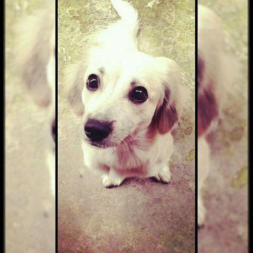 Nossa zoiudinha ❤ Dog Nina Cachorro Bomdia Goodmorning Cute Socute Linda