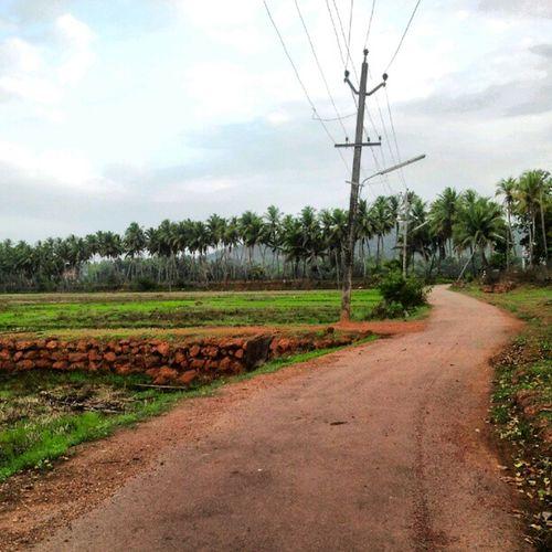 Discpvered new Road Raia