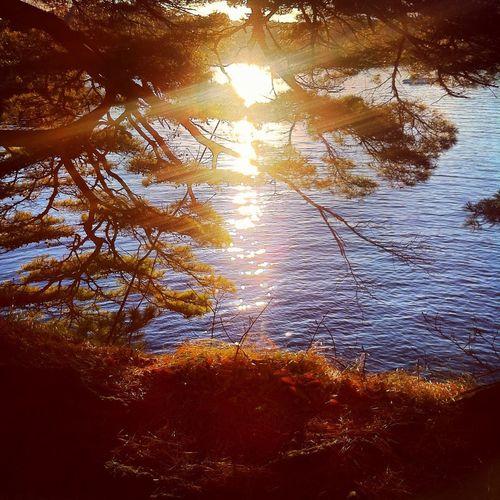 Matsushima Sunset World Heritage Site Stifanibrothers