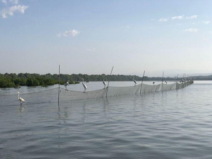 Nature Egrets Fishing Scenics Fishing Nets Fishing Spot