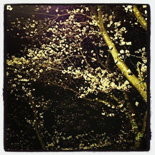 Tree Of Popcorn