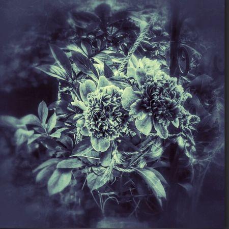 Flowers Flower Collection Spring Flowers The Flowers Series EyeEm Nature Lover EyeEm Best Shots - Black + White Flowerporn Peonies EyeEm Best Edits In Between The Flowers~entre Las Flores