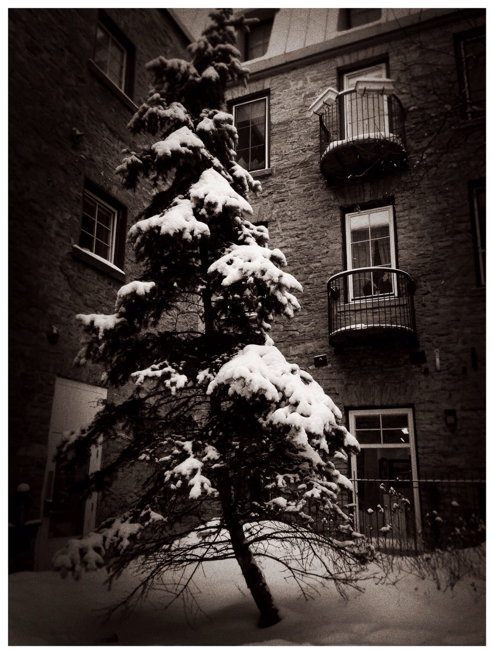 building exterior, architecture, transfer print, built structure, auto post production filter, window, residential building, house, residential structure, low angle view, building, tree, city, outdoors, bare tree, day, winter, snow, no people, sunlight