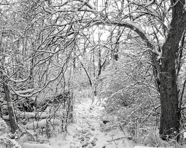 Enchanted Forest Black And White Tree Nature Winter Bare Tree Branch Forest Snow Tranquility Beauty In Nature Outdoors Cold Temperature Landscape Tree Trunk No People