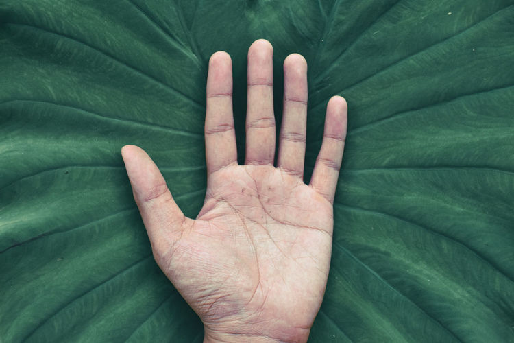 Close-up of hand on leaf