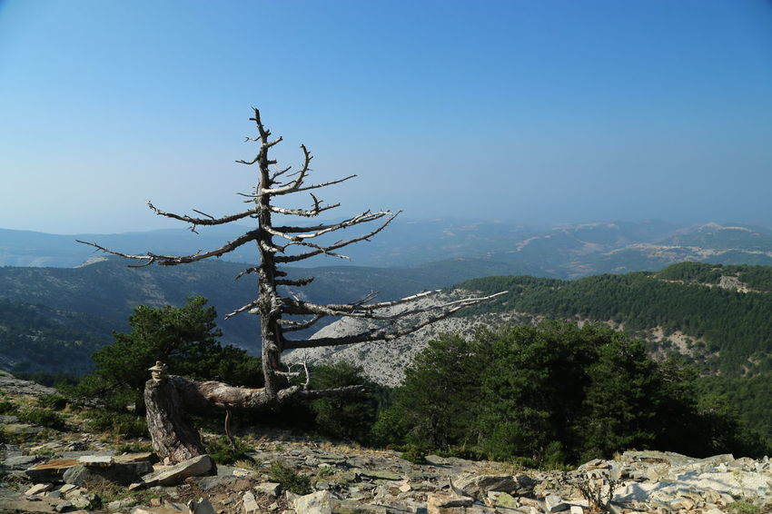 Thassos Ypsarion Beauty In Nature Clear Sky Day Greece Landscape Mountain Mountain Range Nature No People Outdoors Scenics Sky Tranquil Scene Tranquility Tree EyeEmNewHere An Eye For Travel Summer Exploratorium The Great Outdoors - 2018 EyeEm Awards Creative Space My Best Travel Photo