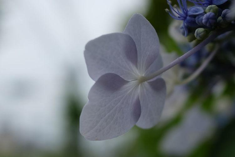 Flower Head Flower Petal Springtime Blossom Scented White Color Botany Close-up Plant