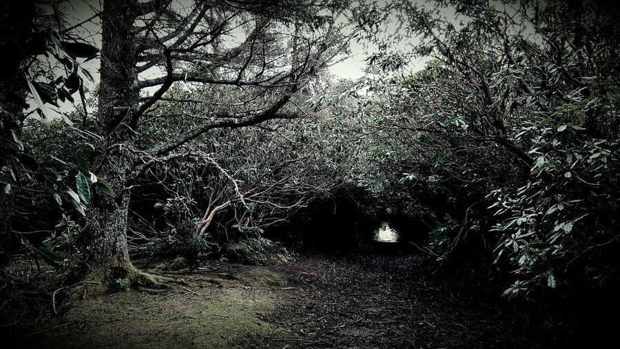 Scene Photography Outdoors Dark No People Nature Beauty In Nature Weird Nature Samsung Galaxy S6 Edge Getting Inspired Lifestyles Photograpy Taking Photos The Adventure Handbook Eyeem Best Shots Nature_collection EyeEm Gallery Eyeemphoto Tranquil Scene Non-urban Scene WoodLand Tranquility Growth Branch Scenics