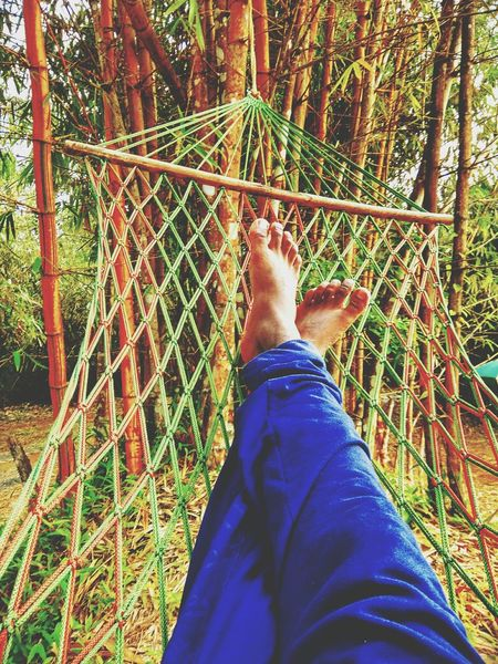 Live For The Story Barefoot Tree Outdoors One Man Only Nature Personal Perspective