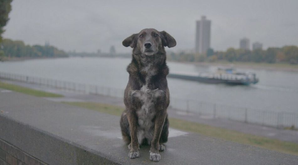 Dog standing on footpath by lake