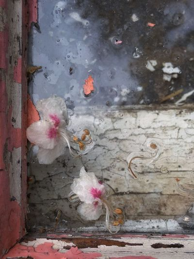 Iphonography Close Up Window Window Frame Wood Frame Azalea Blossoms Texture Old Paint