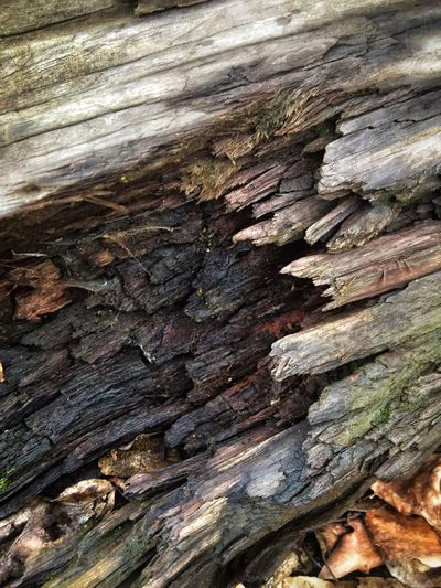 Layers And Textures Patterns In Nature Surfaces And Textures Scenery Textured  Full Frame Close-up Backgrounds No People Day Pattern Wood - Material Rough Nature Outdoors Tree Wood Natural Pattern Tree Trunk Weathered Brown Sunlight