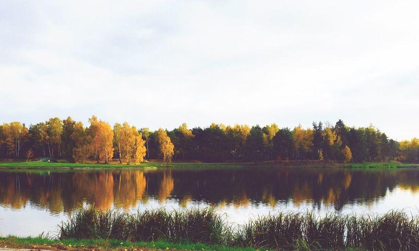 Trees Lake Forest Autumn Colors Autumn Poland