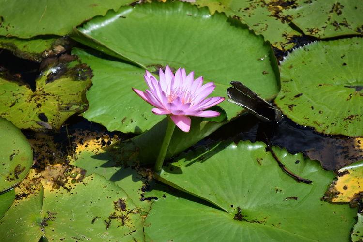 Botany Floating