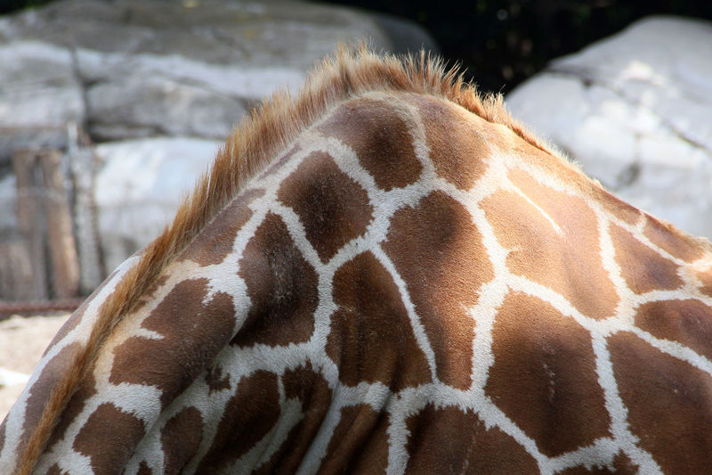 Cropped image of giraffe on sunny day