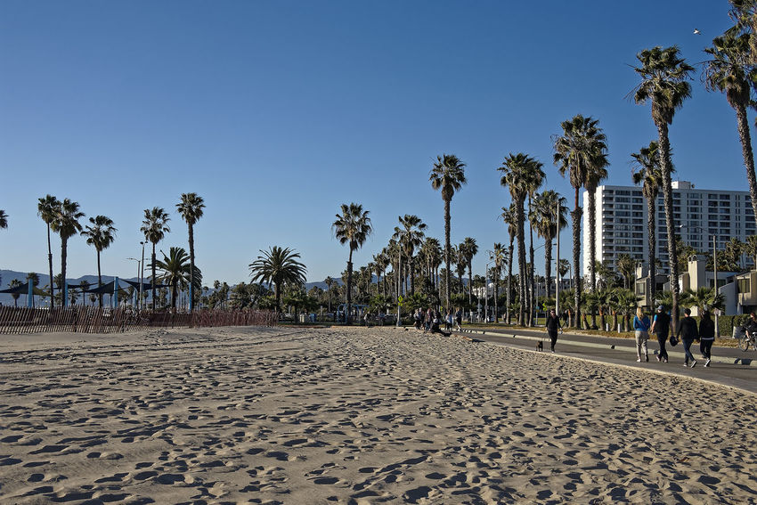 Venice Beach Winter Beach Beach Volleyball Beauty In Nature Clear Sky Day Incidental People Men Nature Outdoors Palm Tree People Real People Sand Sky Travel Destinations Tree Vacations