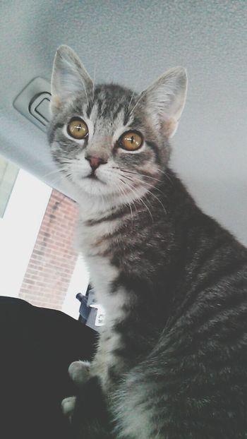 Baby Oliv(: In Love ♡  Kitten 🐱 So Cute :) Her Eyes 😍