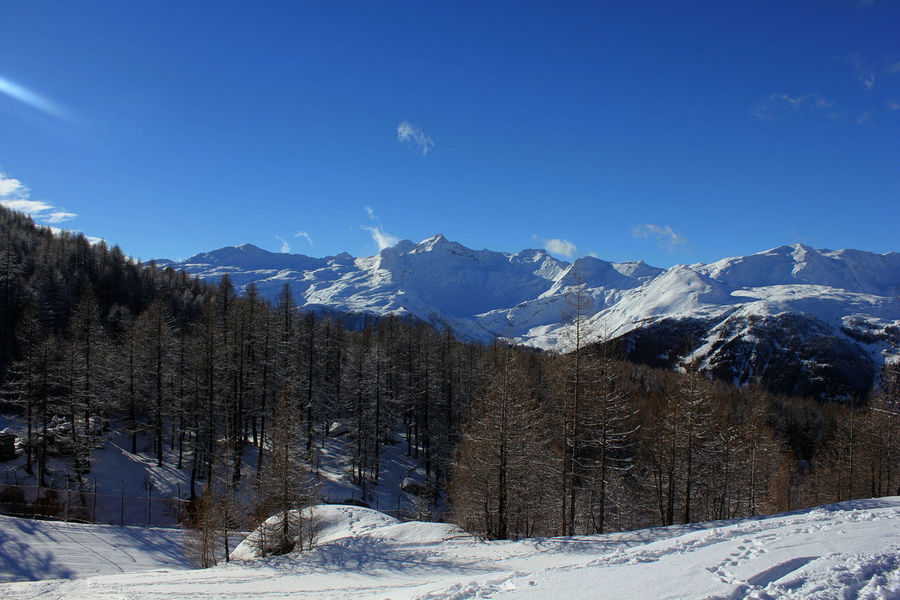 Winter season in Madesimo Madesimo Peek Snow ❄ Sunny Winter Bare Trees Beauty In Nature Blue Sky Cold Temperature Day Italy Landscape Leafless Mountain Mountain Peek Nature No People Outdoors Scenics Ski Runs Sky Snow Tranquil Scene Tranquility Winter
