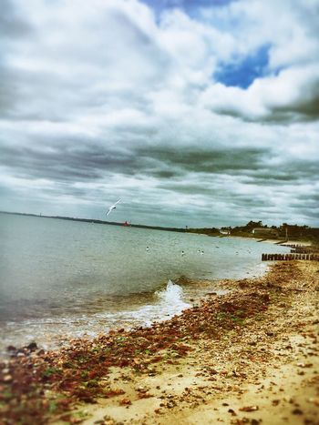 Outdoor Photography Outdoor Life Sea And Sky Sea Water Outside Photography Beach Photography Walks Along Coast Landscape Coastline Simple Pleasures In Life Seaside Sea Birds Gulls Gulls In Flight Gulls And Sea Lepe Lepe Country Park Hampshire