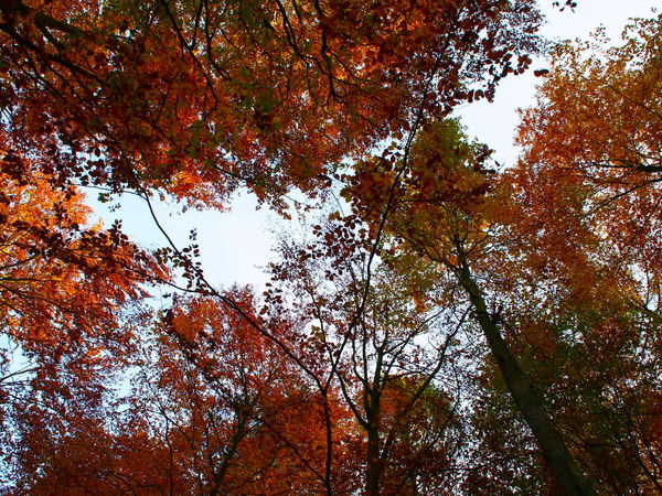 Autumn Beauty In Nature Branch Change Day Growth Leaf Low Angle View Nature No People Outdoors Sky Tree