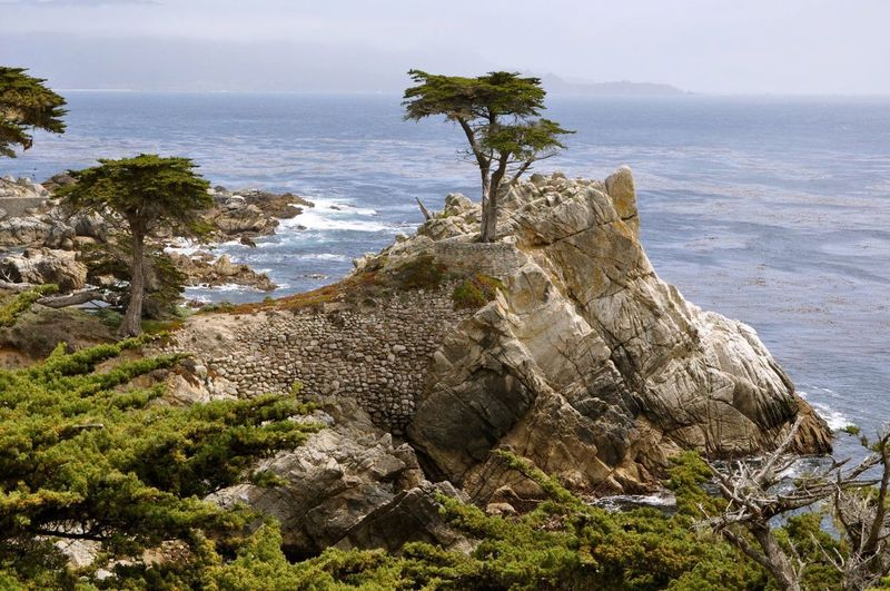 17 Mile Drive USA California Coast Mount Carmel The Lone Cypress 17 Mile Drive Beach Trees And Water Trees Nature Sea Water Plant Tree Sky Beauty In Nature Rock Horizon Over Water Outdoors Tranquil Scene Scenics - Nature Day No People Beach Growth Rock - Object Solid Land Tranquility Nature