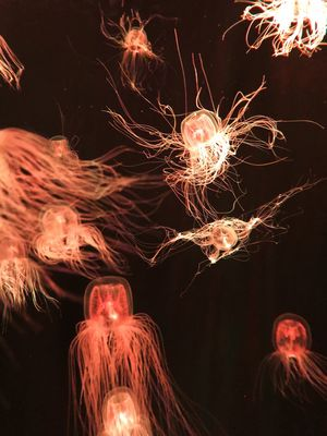 Jellyfish . . . 몽롱 CHEOLstyle #iPhone8 환상 철스타일 Night Glowing Illuminated Long Exposure No People Low Angle View Motion