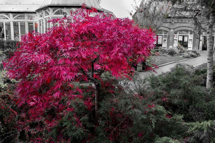 Autumn colours, Southport Autumn Colors Fall