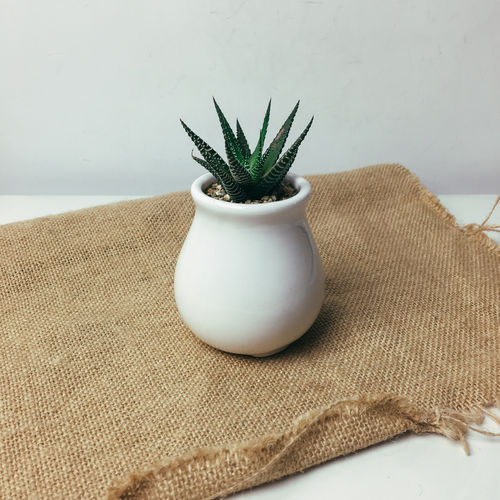 High angle view of aloe vera in white pot on jute against wall