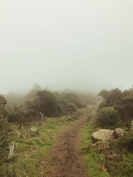 Way Fog Foggy Mist Cloud The Way Forward Landscape Nature Clear Sky Tranquility Tranquil Scene No People Tree Day Outdoors Scenics Beauty In Nature Field Grass Sky Plant