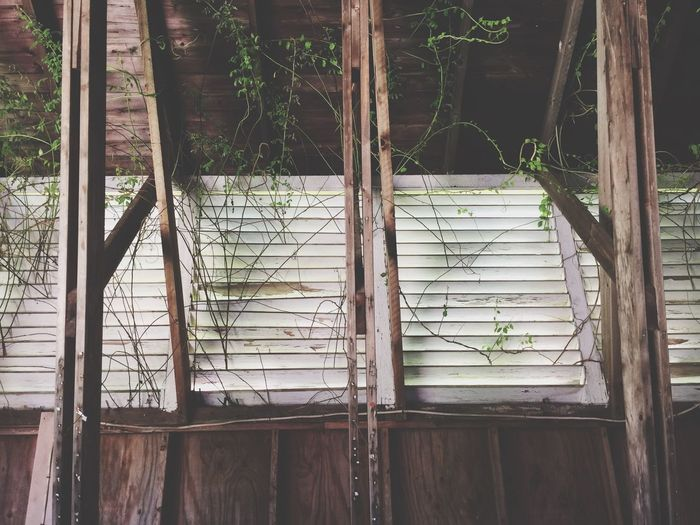 No People Architecture Day Built Structure Growth Outdoors Nature Barn Abandoned Vines Beams Overgrown The Week On EyeEm