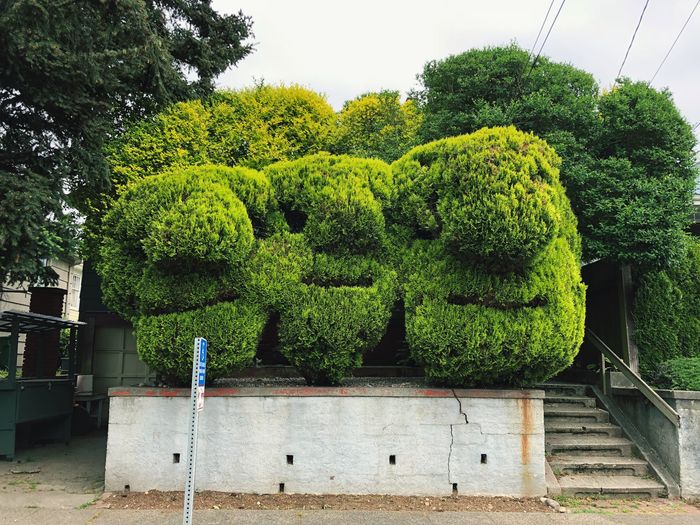 Three lush bushes shaped into faces on a city street Vegetation Foliage Lush Hedge Bush Face Plant Green Color Growth Tree Day No People Nature Outdoors Sunlight Front Or Back Yard Building Exterior