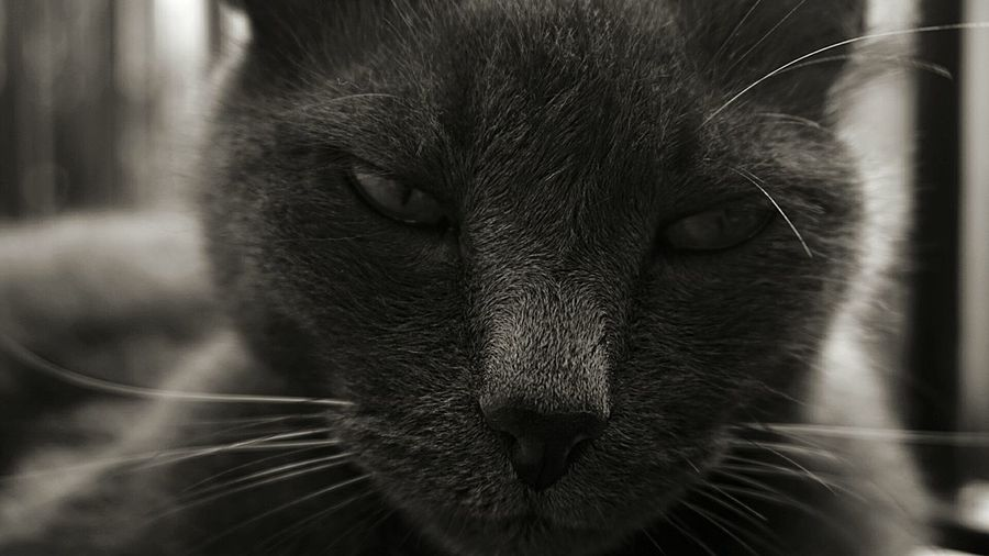 The King of the streets Cat Check This Out Taking Photos King Wise Cat Oldbutstrong Sommo Cenerito Dramatic