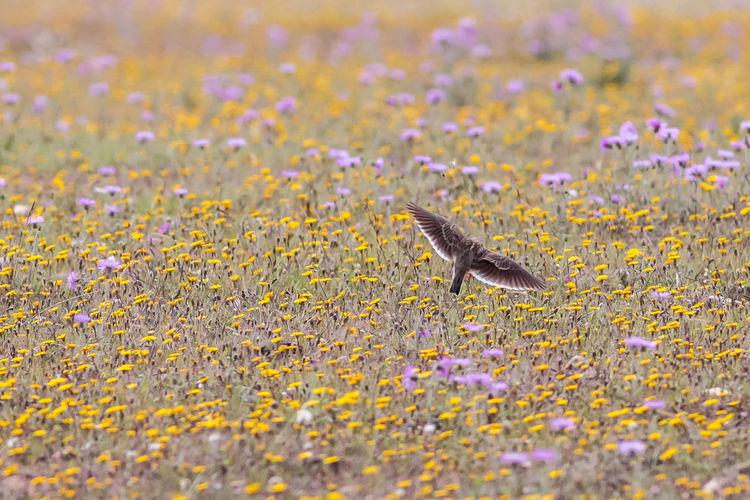 Close-up of bird in field
