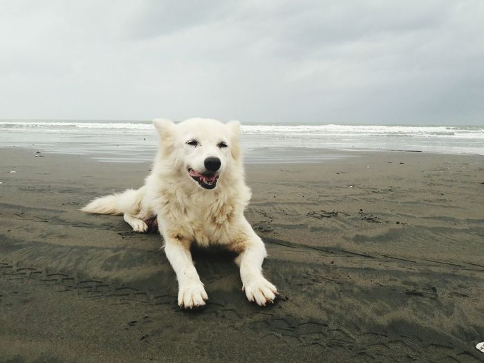 EyeEm Selects Dog One Animal Outdoors Domestic Animals Cloud - Sky Eyeemphoto Visualsoflife The Week On EyeEem Taking Photos EyeEm Gallery EyeemPhilippines Sand Beach EyeEm Photographylovers Cellphone Photography The Week On EyeEm Pet Portraits