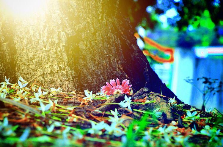 Enjoy your life ..Enjoy your world Enjoying Life Nature_collection EyeEm Nature Lover Hello World