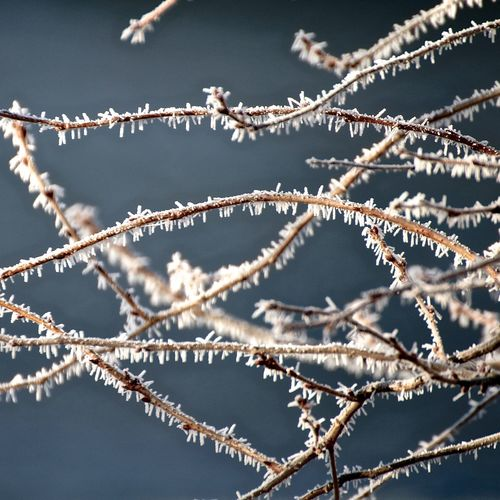 Close-up of frosted twigs during winter