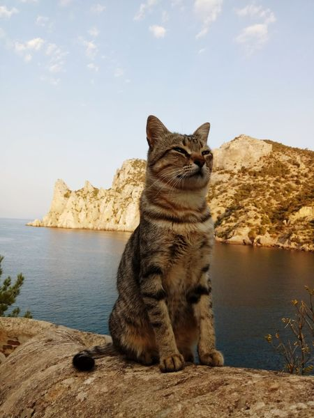 Animal Sea Rock - Object Water One Animal Domestic Cat Nature Pets No People Day Sun Cat Beauty In Nature Nature Meditation Good Morning Tranquility Sunrise Summer Landscape