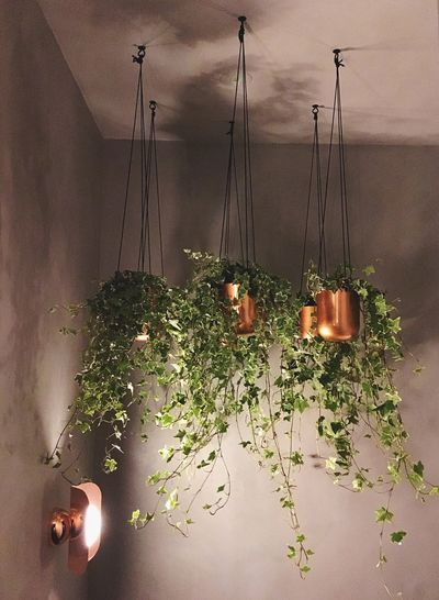 PENDANTS... Flowers Flower Growing Lamp Wall Climbing Hello World Lookingup Roof Shadows & Lights Leaves Leaf Vase Decoration Green Taking Photos Getting Inspired House Lighthouse Lights Light Light And Shadow Nature_collection Plant Growth Indoors  Illuminated Nature Day Freshness