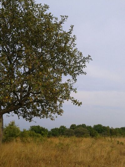 africa Nature_collection
