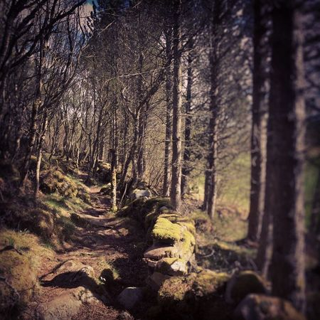 Forest Nature Tree Landscape Day Woods Outdoors No People Trail Norway