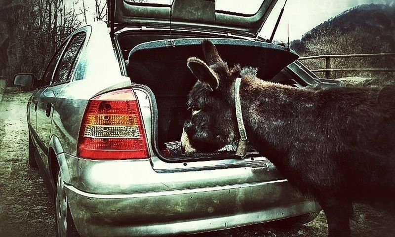 Cars Car Animals Predator