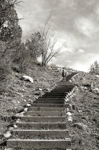 Capturing Freedom Blackandwhite Staircase Nature Mountains Shadows Monochrome On The Way Youth Colorado Hiker Stepping Stepping Stone Stairs The Next Step Garden Path Countryside Bare Tree Hiking