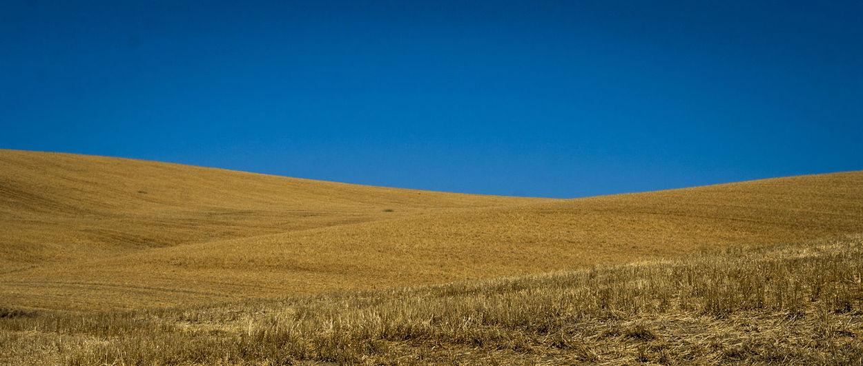 Allá, en las tierras altas, por donde traza el Duero su curva de ballesta en torno a Soria, entre plomizos cerros y manchas de raídos encinares, mi corazón está vagando, en sueños... ¿No ves, Leonor, los álamos del río con sus ramajes yertos? Mira el Moncayo azul y blanco; dame tu mano y paseemos. Por estos campos de la tierra mía, bordados de olivares polvorientos, voy caminando solo, triste, cansado, pensativo y viejo. Antonio Machado Linares Agriculture Beauty In Nature Blue Campiña Jaen Cereal Plant Clear Sky Day Field Grass Hill Horizon Over Land Landscape Nature No People Outdoors Rural Scene Scenics Sky Summer Wheat