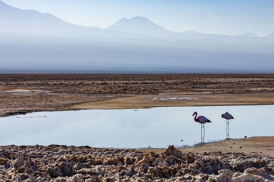 Chile, Salar de Atacama, Flamingos In Water Flamingo Water Mountain Sky Landscape Nature Mountain Range Outdoors No People Beauty In Nature Salt Lake