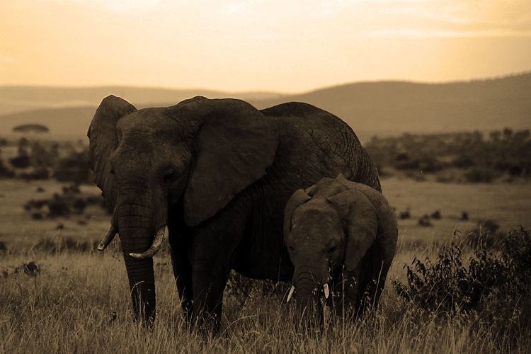 Family elephants portrait